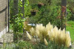 Pergola-hell-pflanzen